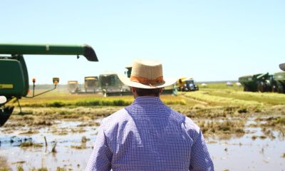 Los productores paraguayos están en condiciones de vender a Brasil aseguran.