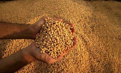 Soja. Imagen ilustrativa. Foto: Agrositio