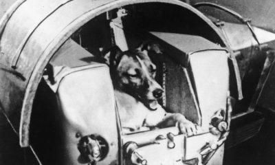 Fue lanzada en el satélite ruso Sputnik 2 el 3 de noviembre de 1957. Foto: BBC