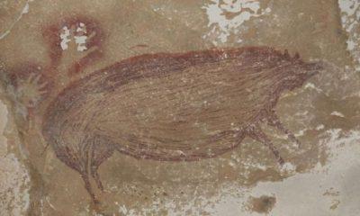La imagen representa un cerdo salvaje que se cree que fue dibujado hace 45.500 años. Foto: BBC