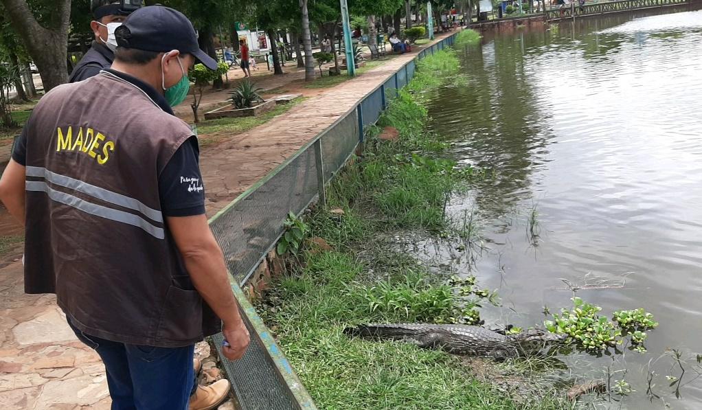 Técnicos del Mades intervinieron la comuna de Itá por manejo irregular de animales silvestres. Foto: Gentileza.