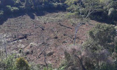 Marina Cue seguirá siendo una reserva forestal. Foto: Gentileza.