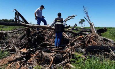 Más de 500 hectáreas de bosques fueron desmontadas ilegalmente en un establecimiento ganadero de San Pedro. Foto: MADES