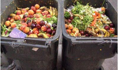 Informe de Naciones Unidas alerta sobre el desperdicio de alimentos. Foto: EcoN
