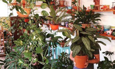 Tener una jungla urbana en casa es posible. Foto: Mundoli (Gentileza)