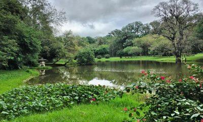 Laguna del Jardín Botánico. Foto: Pinterest