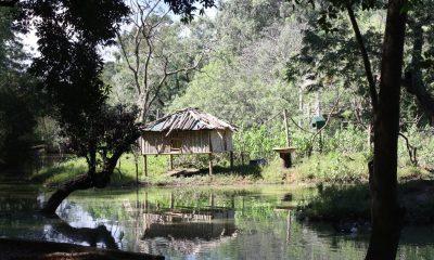 El Jardín Botánico alberga un remanente de bosque nativo, humedales y diversos tipos de suelo. Foto: Flickr
