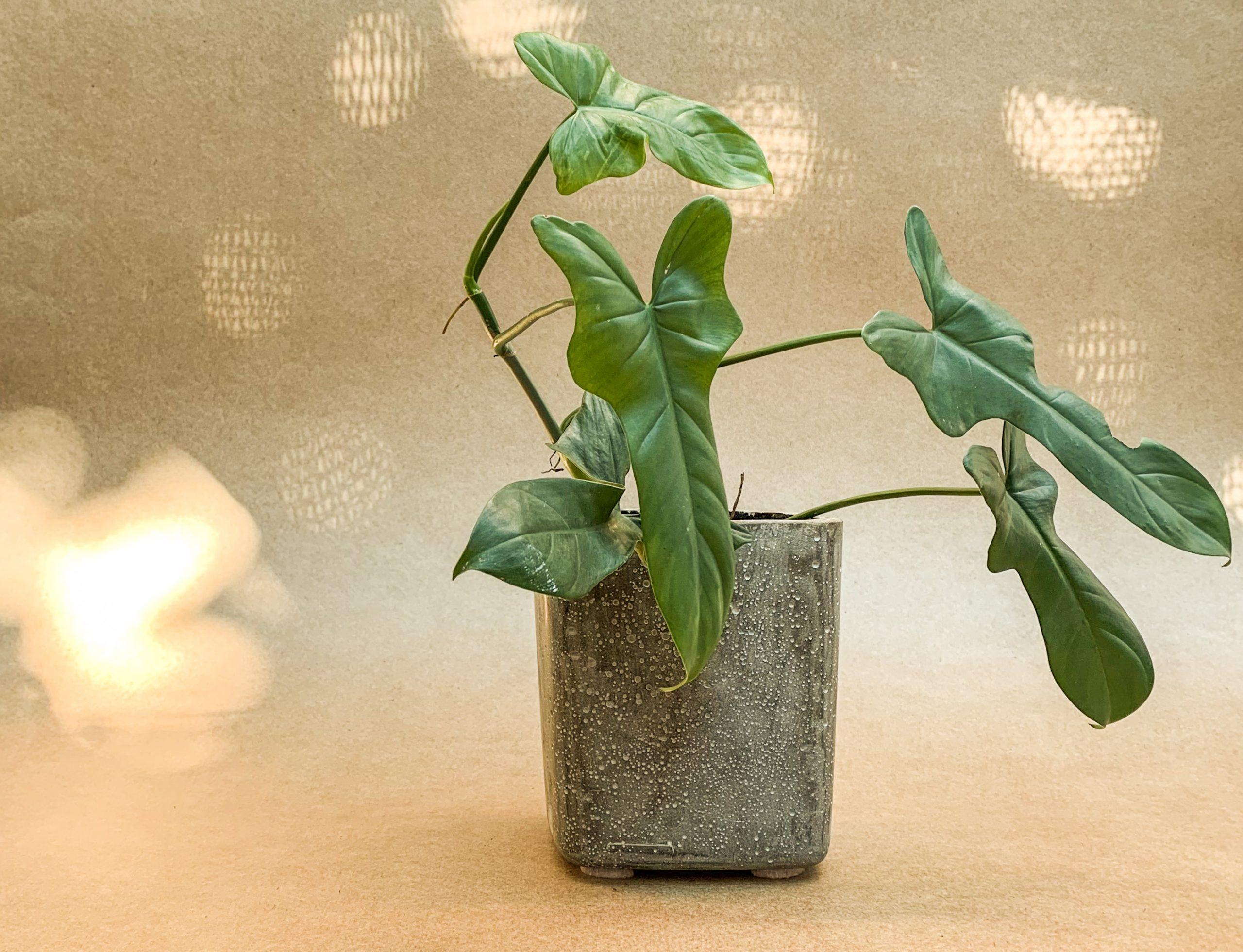 CMNTO es artesanal y busca brindar un objeto único. Foto: Gentileza CMNTO