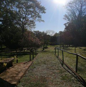 Rosedal. vista hacia el jardin K amba'i, 2021 © Marli Delgado