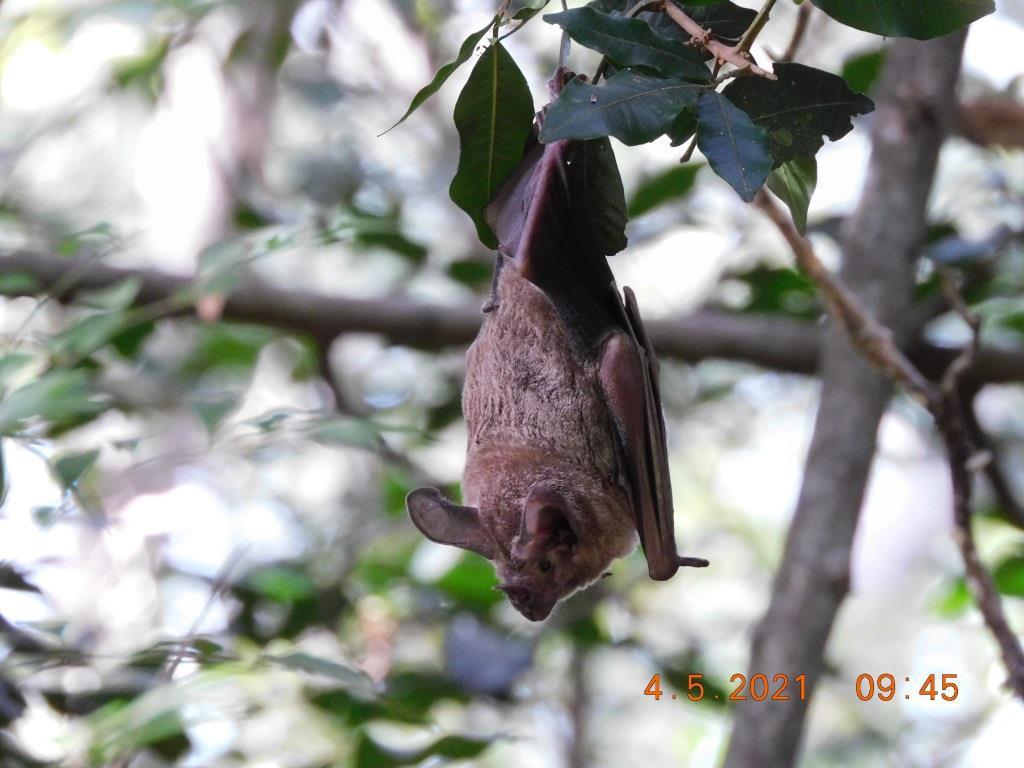 Dormidero de murciélago. Foto: Hugo del Castillo.