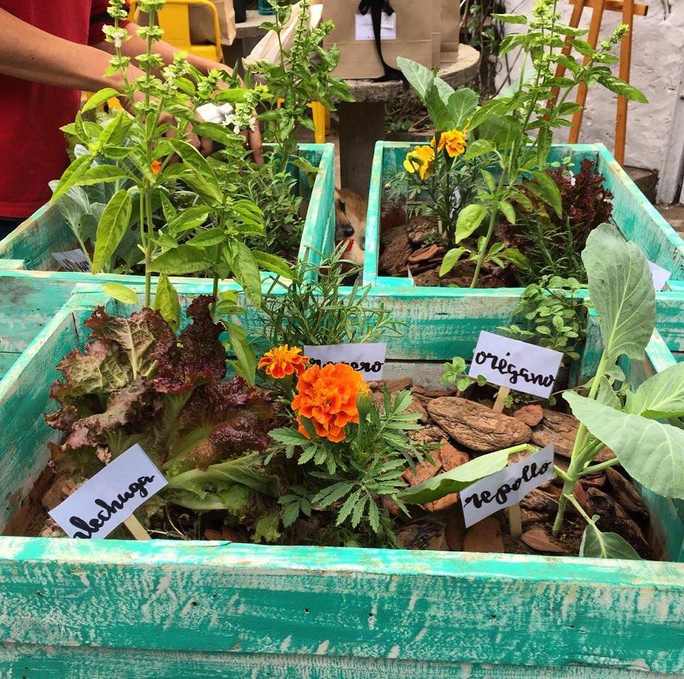 Caja-huerta para los más chicos o adornar de manera sustentable un balcón. Foto: Capuera.n