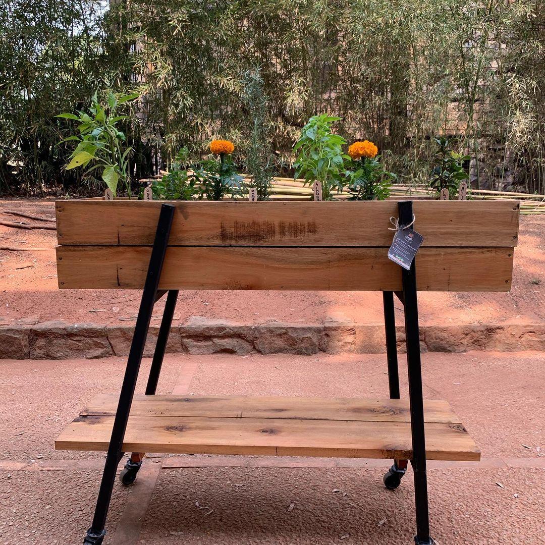 Cajón huerta con base metálica y rueditas para mover fácilmente. Tiene abono orgánico. Foto: La Mashú