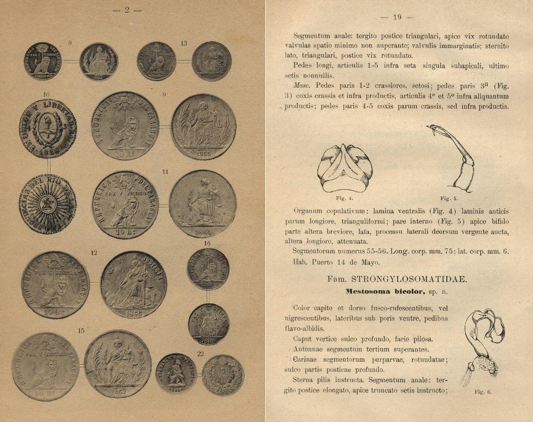 RIP, ilustraciones. Artículo de Manuel Peña sobre numismática y otro de Guido Boggiani sobre coleópteros de Paraguay. Colección Vera-Scuderi. Cortesía