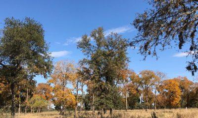 Árboles de Urunde´y en el Chaco. Foto: Alberto Yanosky.