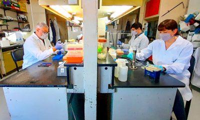 Investigadores del CONICET en el Laboratorio de Terapia Molecular y Celular del Instituto Leloir que desarrolla la vacuna CoroVaxG.3. Foto: Télam.
