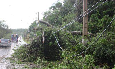Varios cables quedaron sueltos productos de la caída de árboles. (Foto Agenda Paraguay)